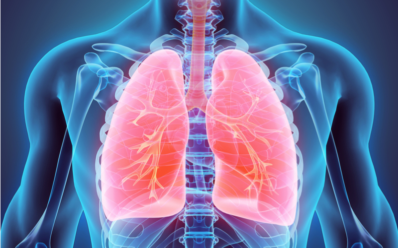The Importance Of Looking After Your Lungs