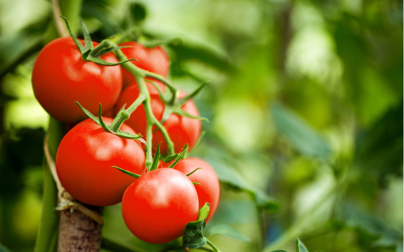 Celebrating the health benefits of tomatoes for British Tomato Week